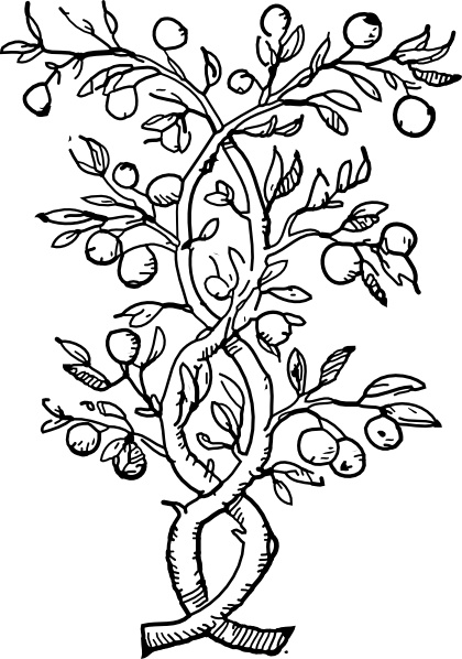 Tree with fruits clipart black and white clip royalty free download Fruit Tree Branches clip art Free vector in Open office ... clip royalty free download