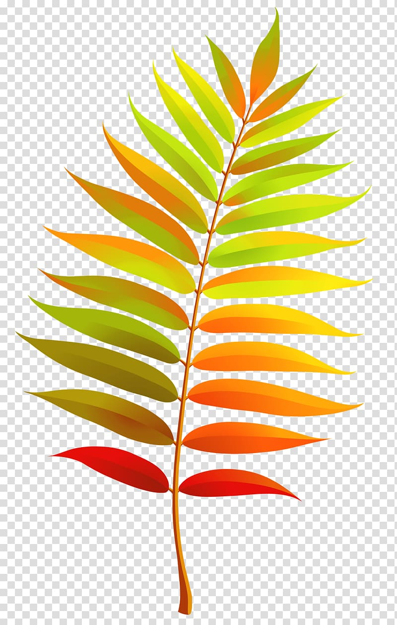Tree with red yellow and green leaves clipart banner black and white Green, orange, and red leaf illustration, Leaf , Colorful ... banner black and white
