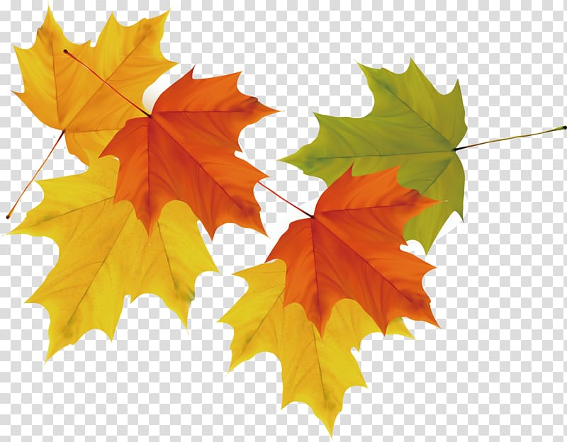 Tree with red yellow and green leaves clipart image royalty free download Orange, yellow, and green leaves , Maple leaf Autumn, maple ... image royalty free download