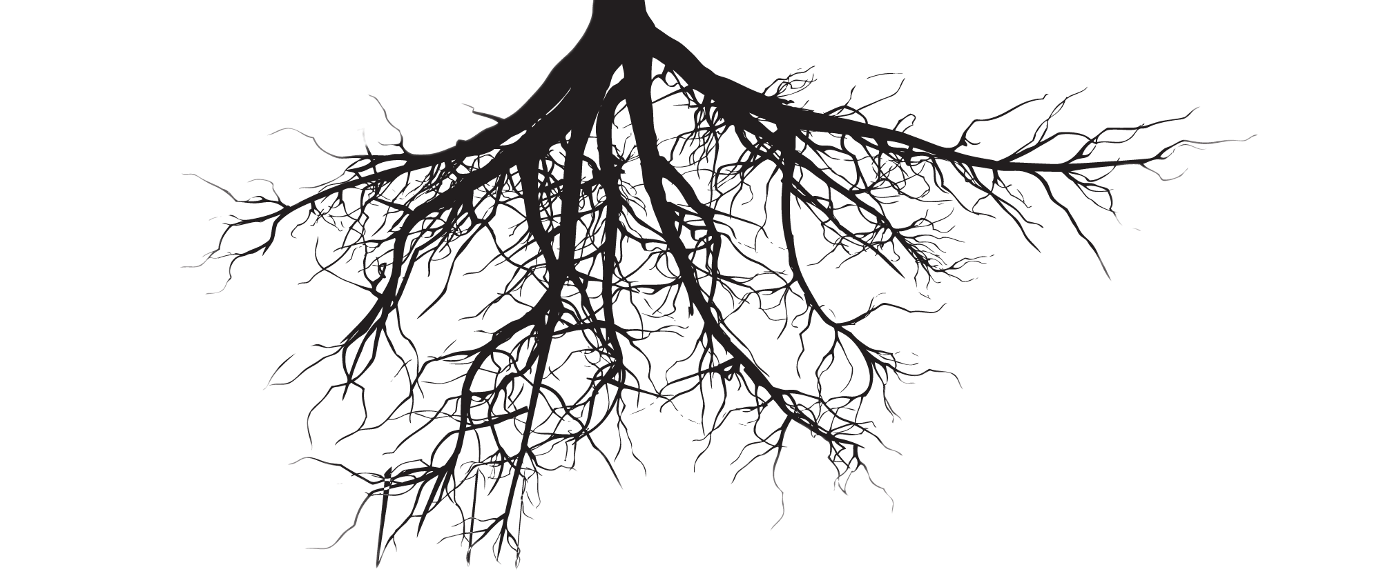 Tree with roots clipart free clip art black and white library Fine Roots transparent PNG - StickPNG clip art black and white library
