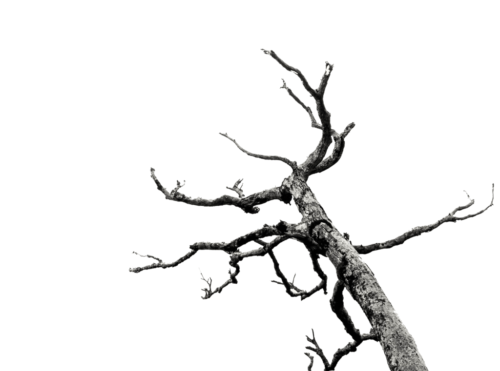 Dead Tree/Branches Stock (png) by AkaSling on DeviantArt vector freeuse library