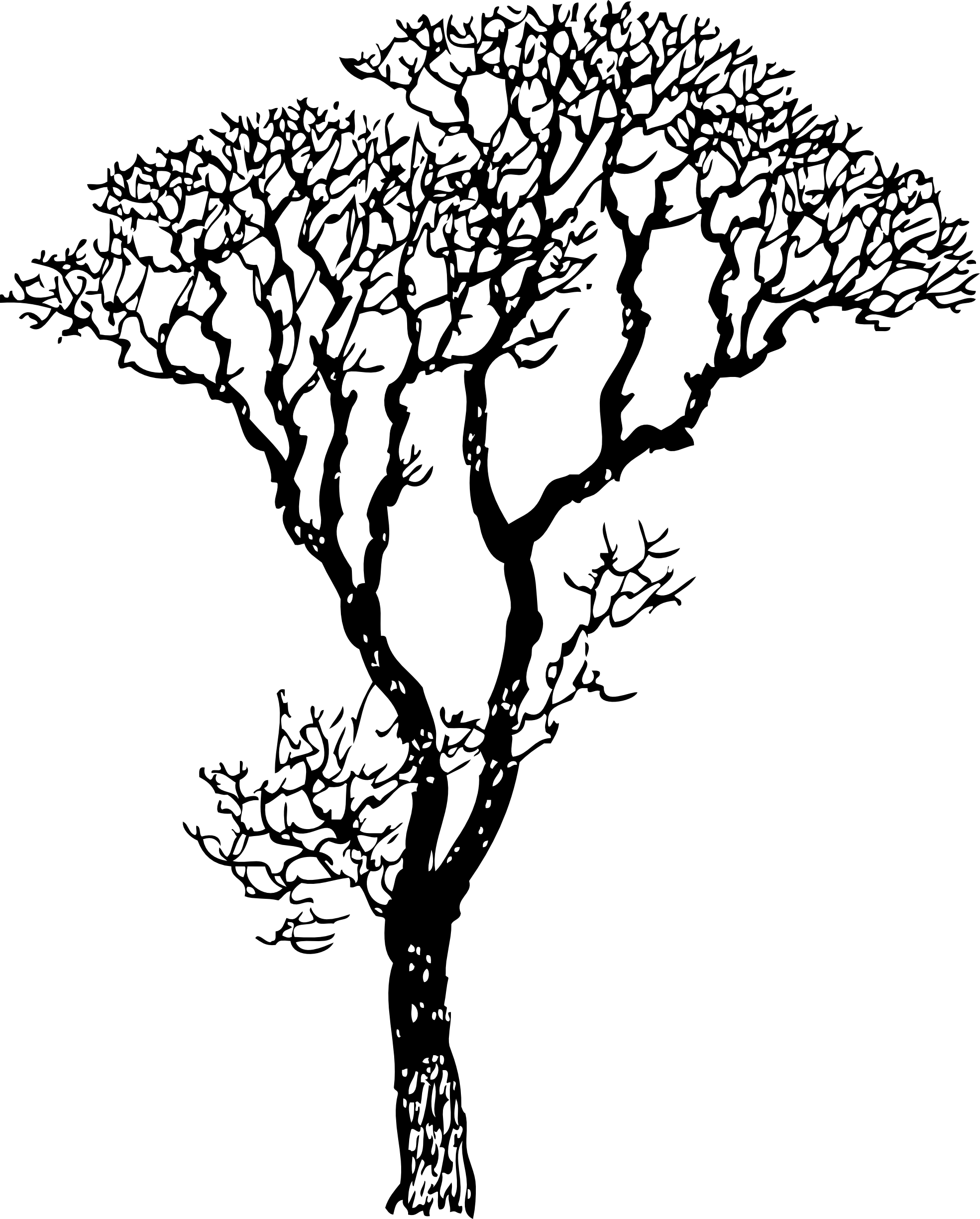 Bare tree black and white clipart