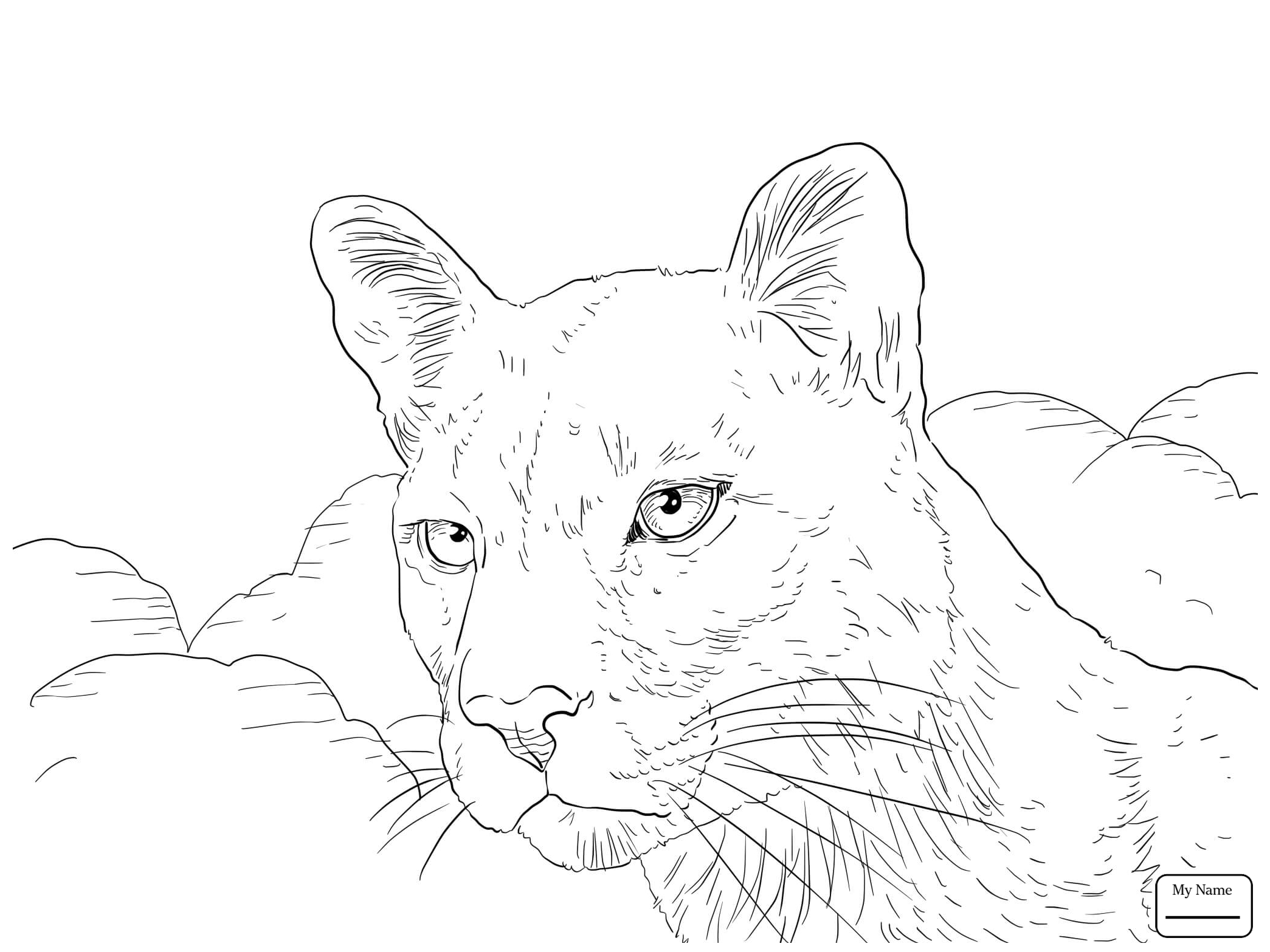 Mountain Lion Face Drawing at PaintingValley.com | Explore ... png freeuse download