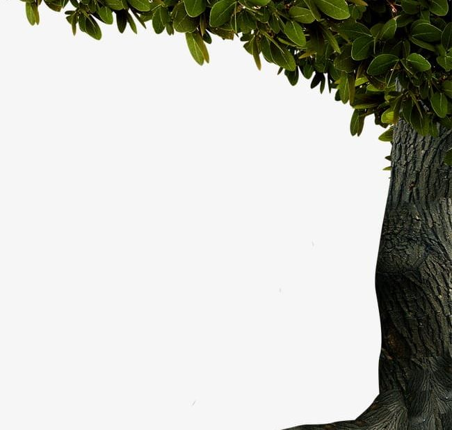 Tree Decoration Border PNG, Clipart, Border, Border Clipart ... clip art transparent stock