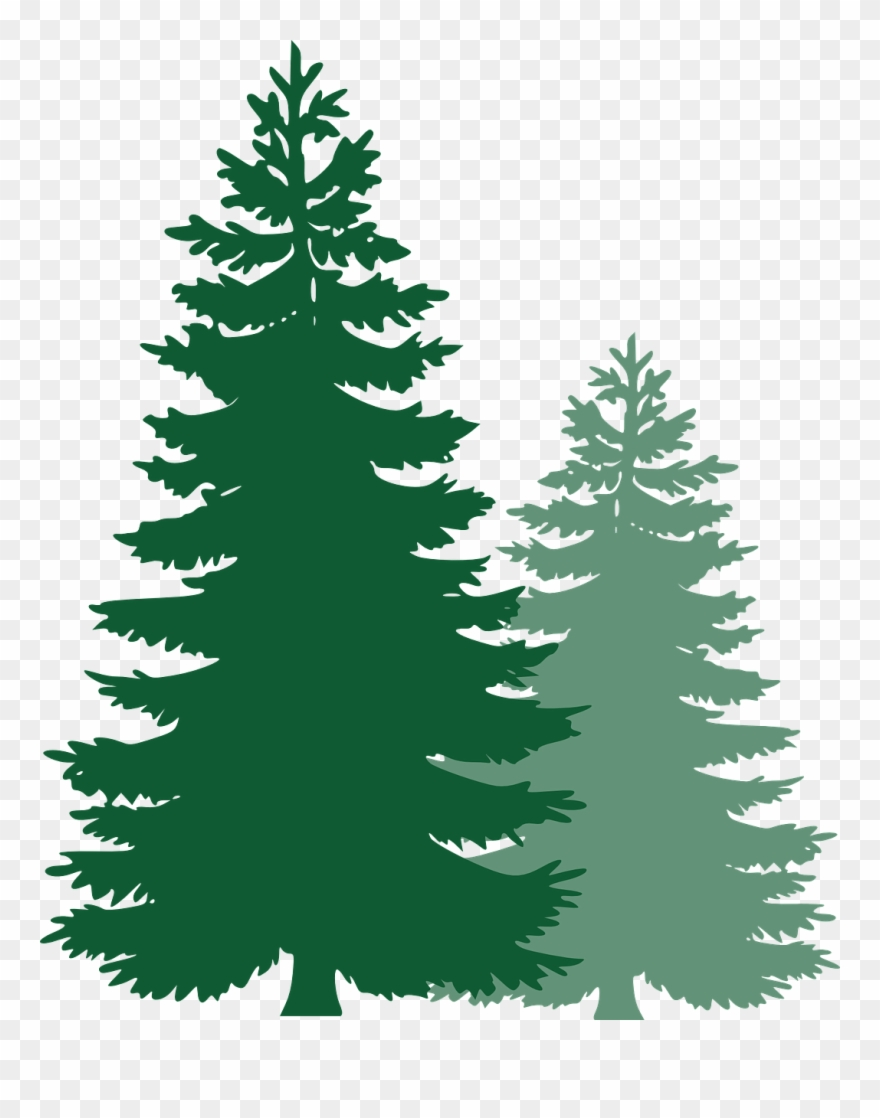 Trees clipart spruce svg black and white Pine Trees, Spruce Trees, Evergreen Trees, Tree, Spruce ... svg black and white