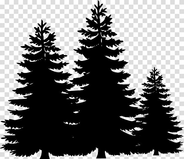Trees clipart spruce graphic royalty free download Spruce Fir Christmas tree Christmas ornament Evergreen, fir ... graphic royalty free download