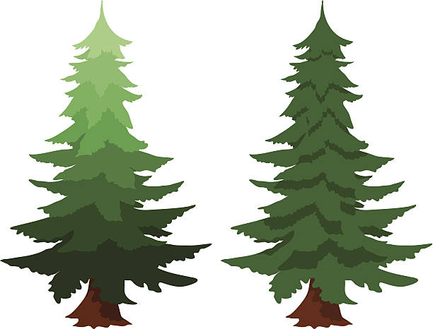 Trees clipart spruce png royalty free download Pine Trees Collection Royalty Free Clipart #179366 ... png royalty free download