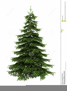 Trees clipart spruce image Free Clipart Spruce Trees | Free Images at Clker.com ... image