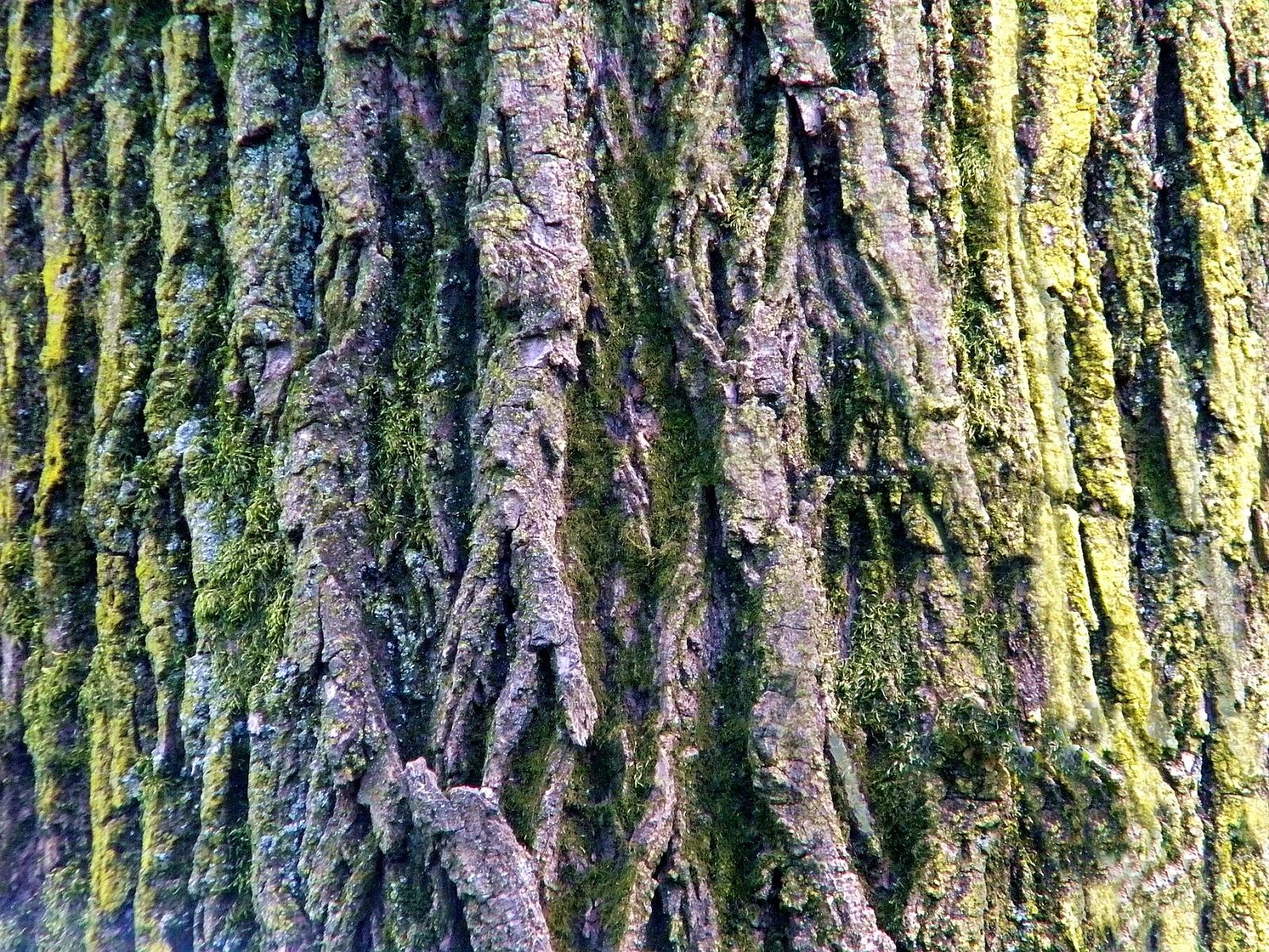 Trees in new york clipart jpg free Tree Bark Clip Art Public Domain Clip Art Photos and Images jpg free