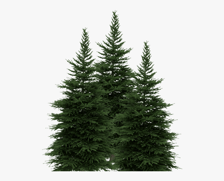 Trees in new york clipart graphic freeuse stock New York Lottery Pine Trees New York Lottery Pine Trees ... graphic freeuse stock