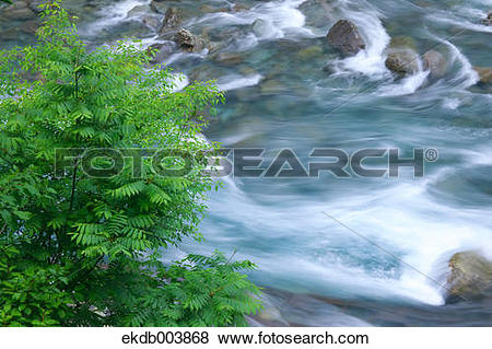 Trees water clipart jpg png royalty free download Pictures of Tree and water stream, Akita Prefecture ekdb003868 ... png royalty free download