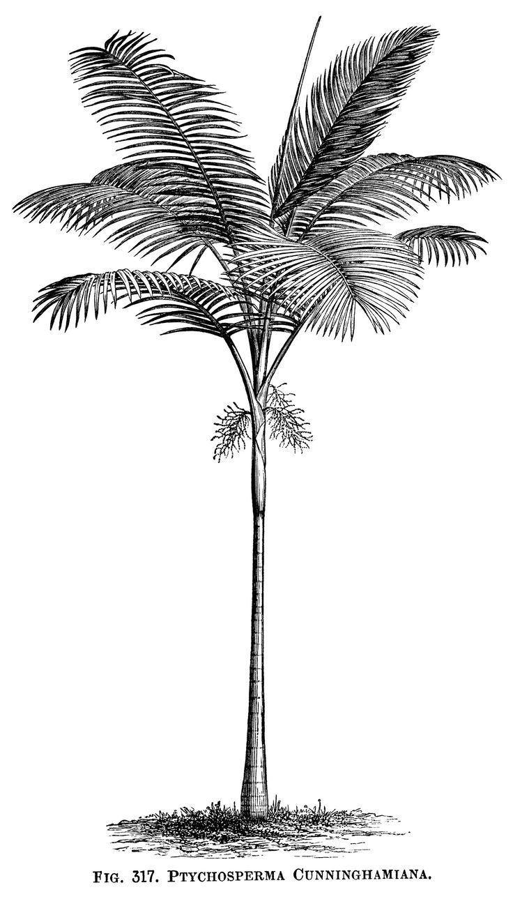 Trees water clipart jpg clip art black and white download 17 Best ideas about Palm Tree Clip Art on Pinterest | Palm tree ... clip art black and white download
