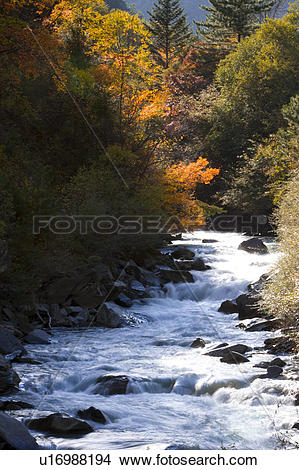 Trees water clipart jpg clip freeuse Stock Photo of Beautiful natural scenery with trees and flowing ... clip freeuse