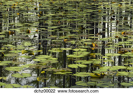 Trees water clipart jpg jpg royalty free library Stock Photo of Reflection of trees in water with lilypads ... jpg royalty free library
