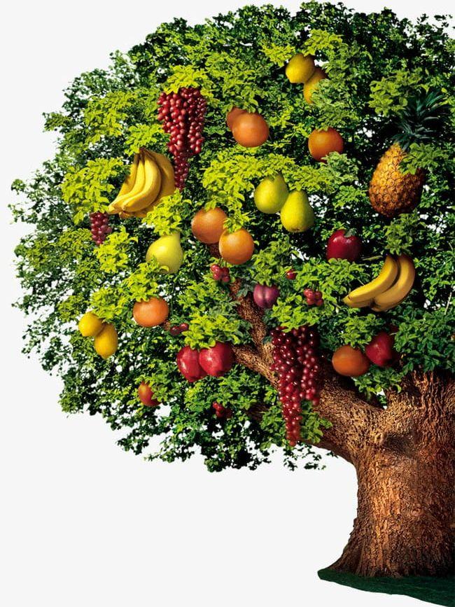 Fruit Trees PNG, Clipart, Fruit, Fruit Clipart, Fruit ... clip art free download