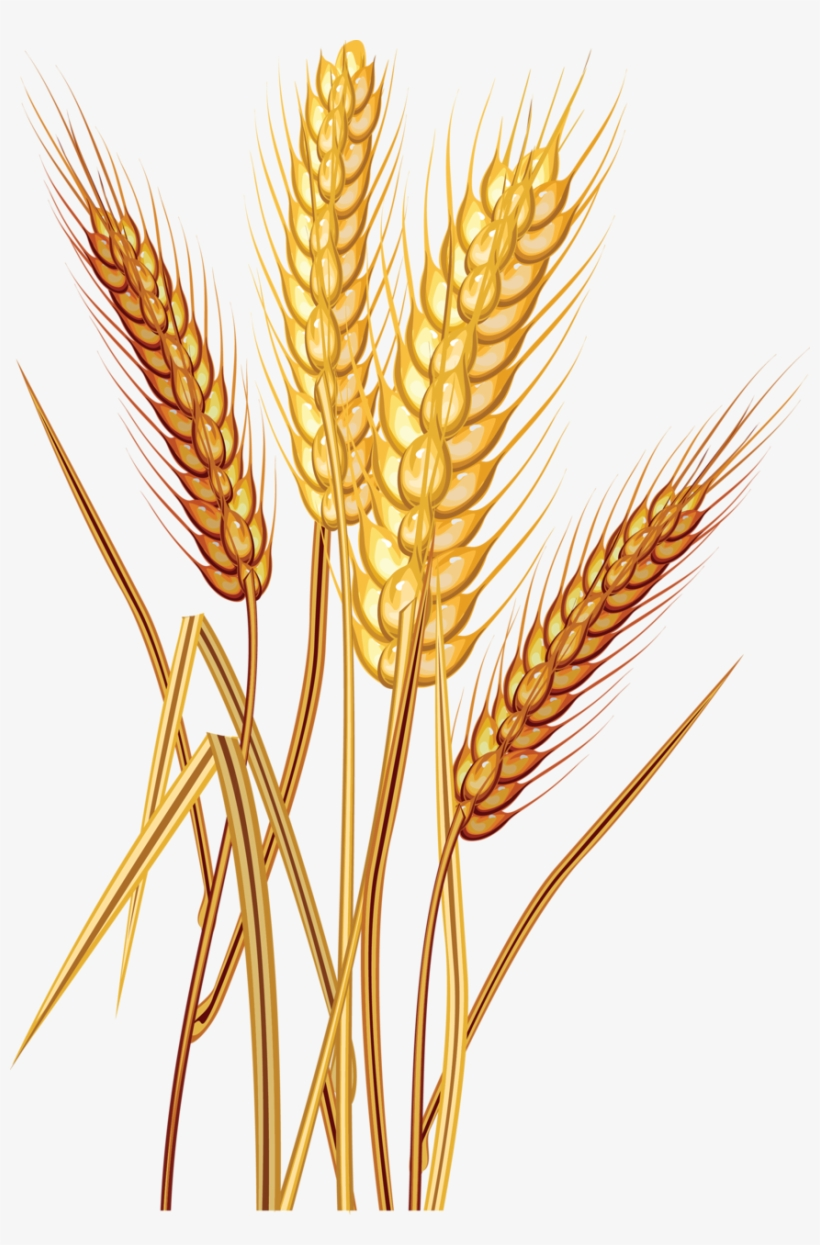 Wheat Clipart Trigo - Wheat Clipart Transparent PNG ... banner library download