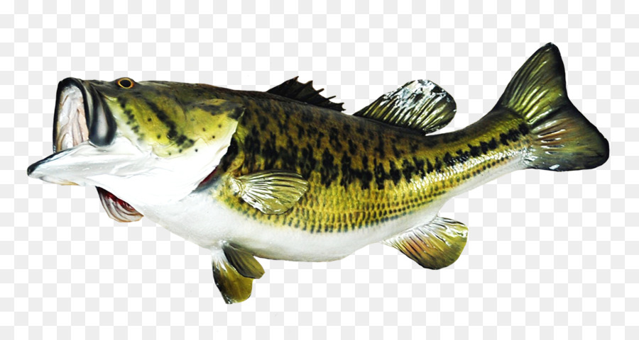 Trophy fish bass clipart transparent svg black and white Largemouth Bass Png & Free Largemouth Bass.png Transparent ... svg black and white