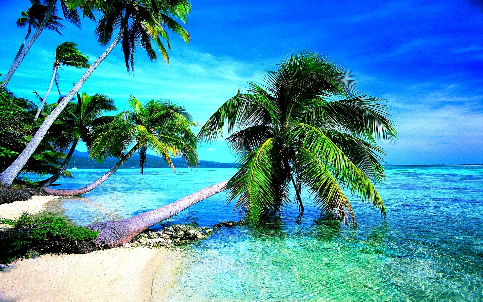 Tropical Beach Screensavers and Wallpaper (67+ images) graphic black and white download