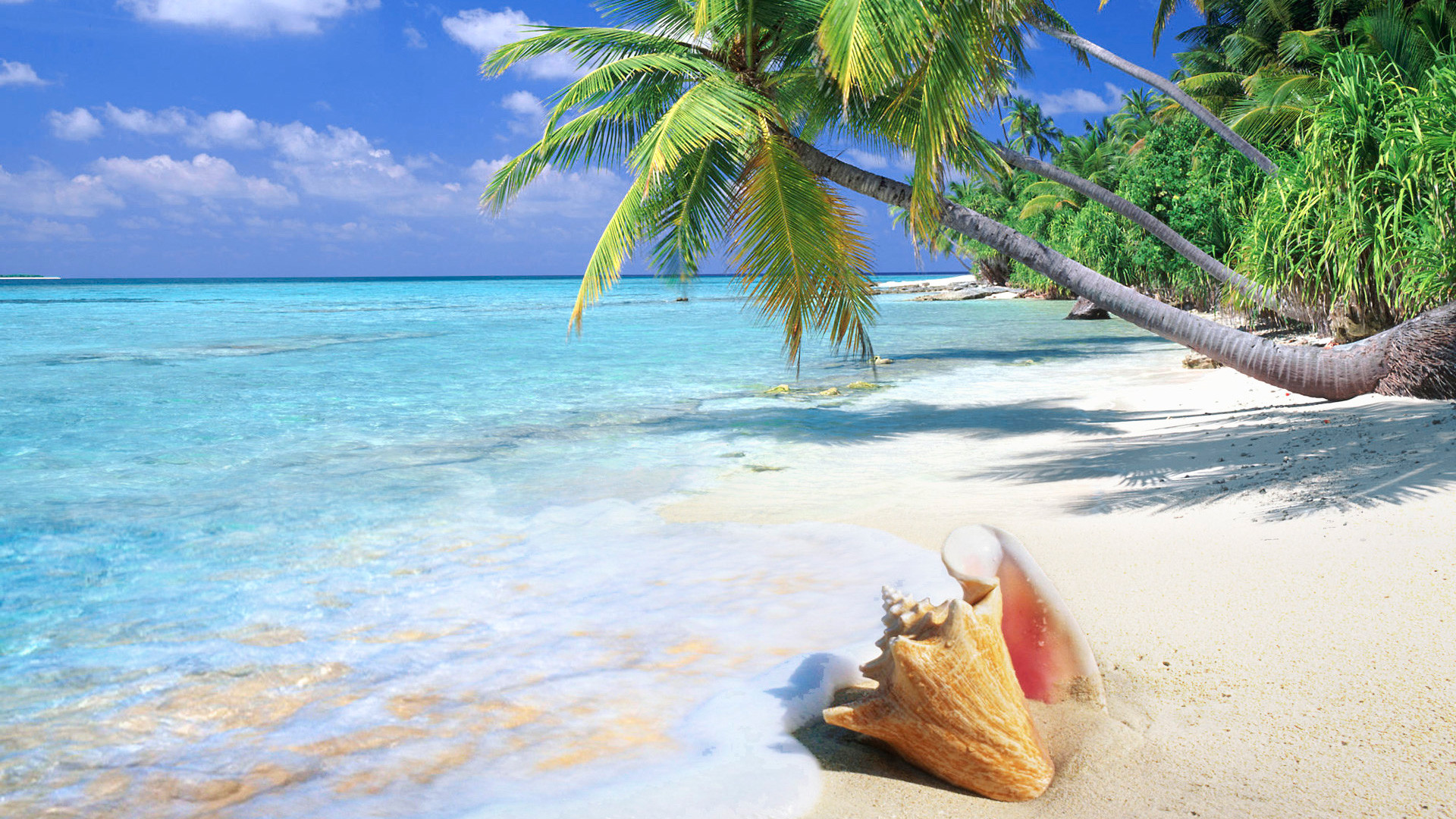 Tropical Beach Screensavers and Wallpaper (67+ images) clipart transparent download