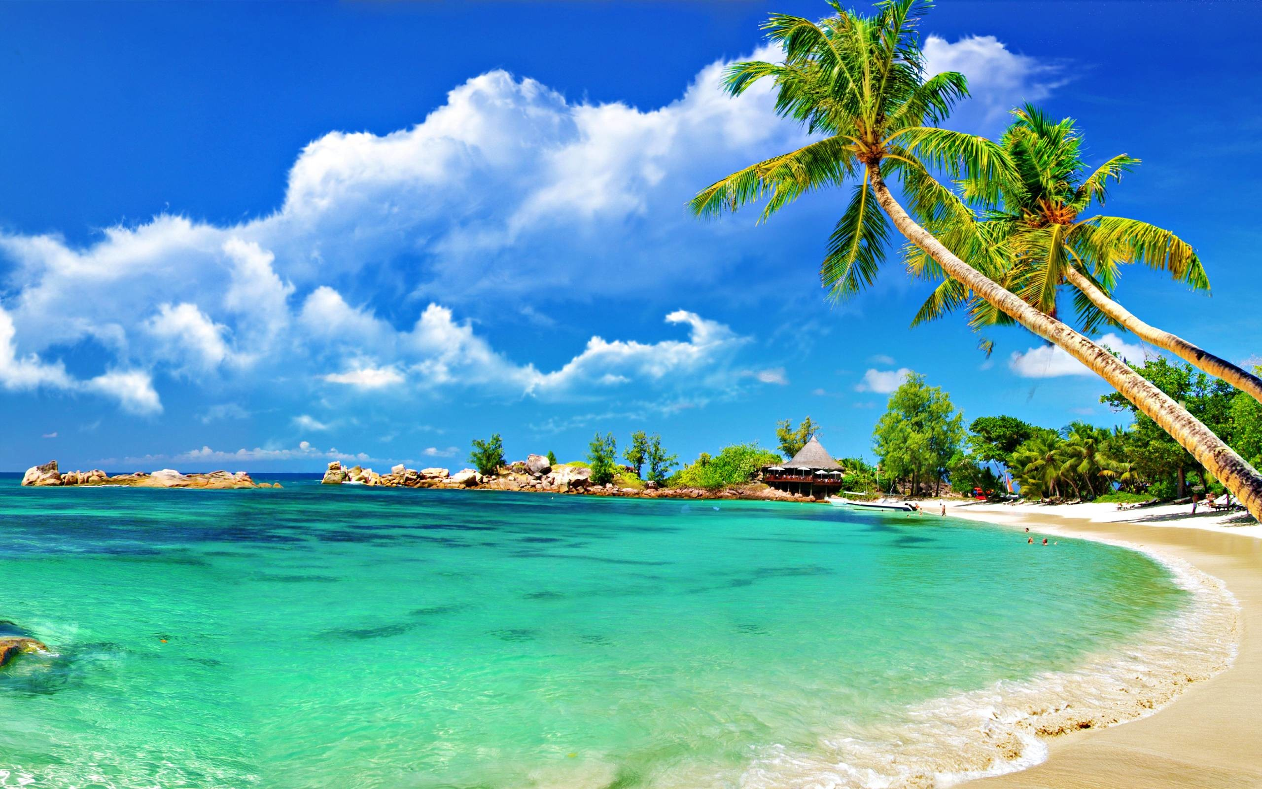 Tropical Background Pictures (54+ images) clip art