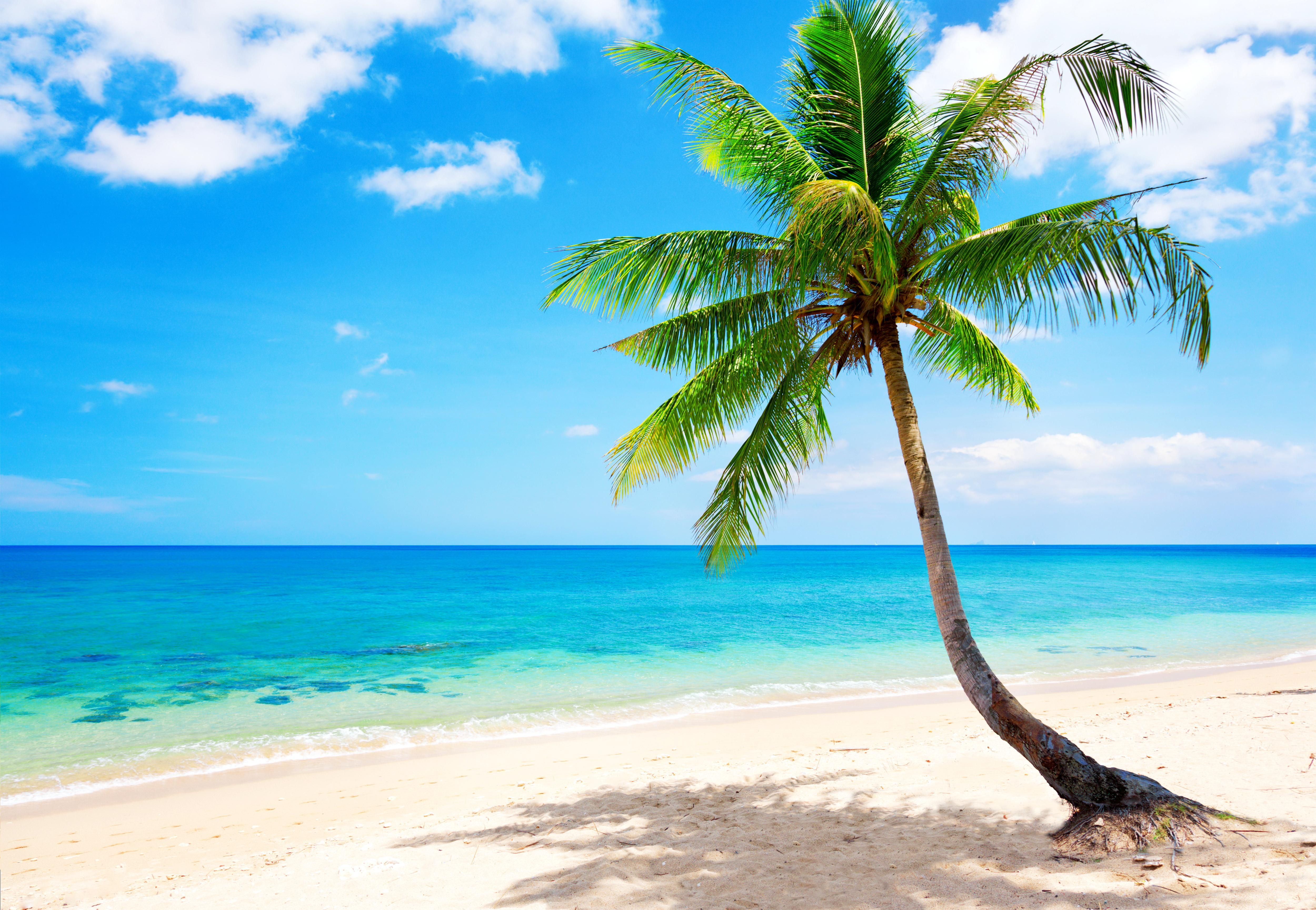 Tropical Beach Wallpapers | Tropical | Beach wallpaper ... image black and white library