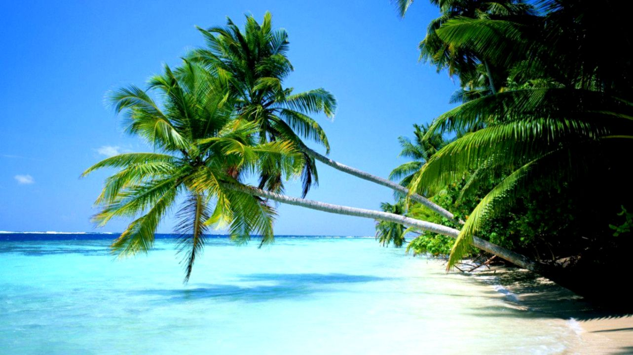Desktop Background Beach Tropical | Wallpapers Lock Screen vector freeuse library