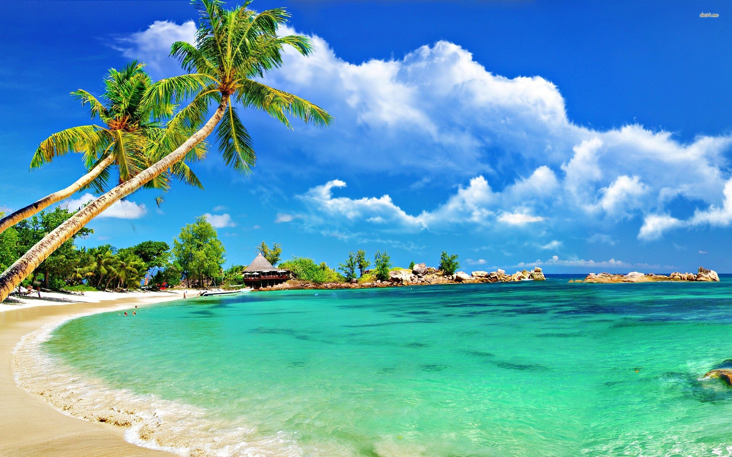 Tropical Desktop Wallpapers Tropical Wallpaper HD Wallpapers ... svg black and white download