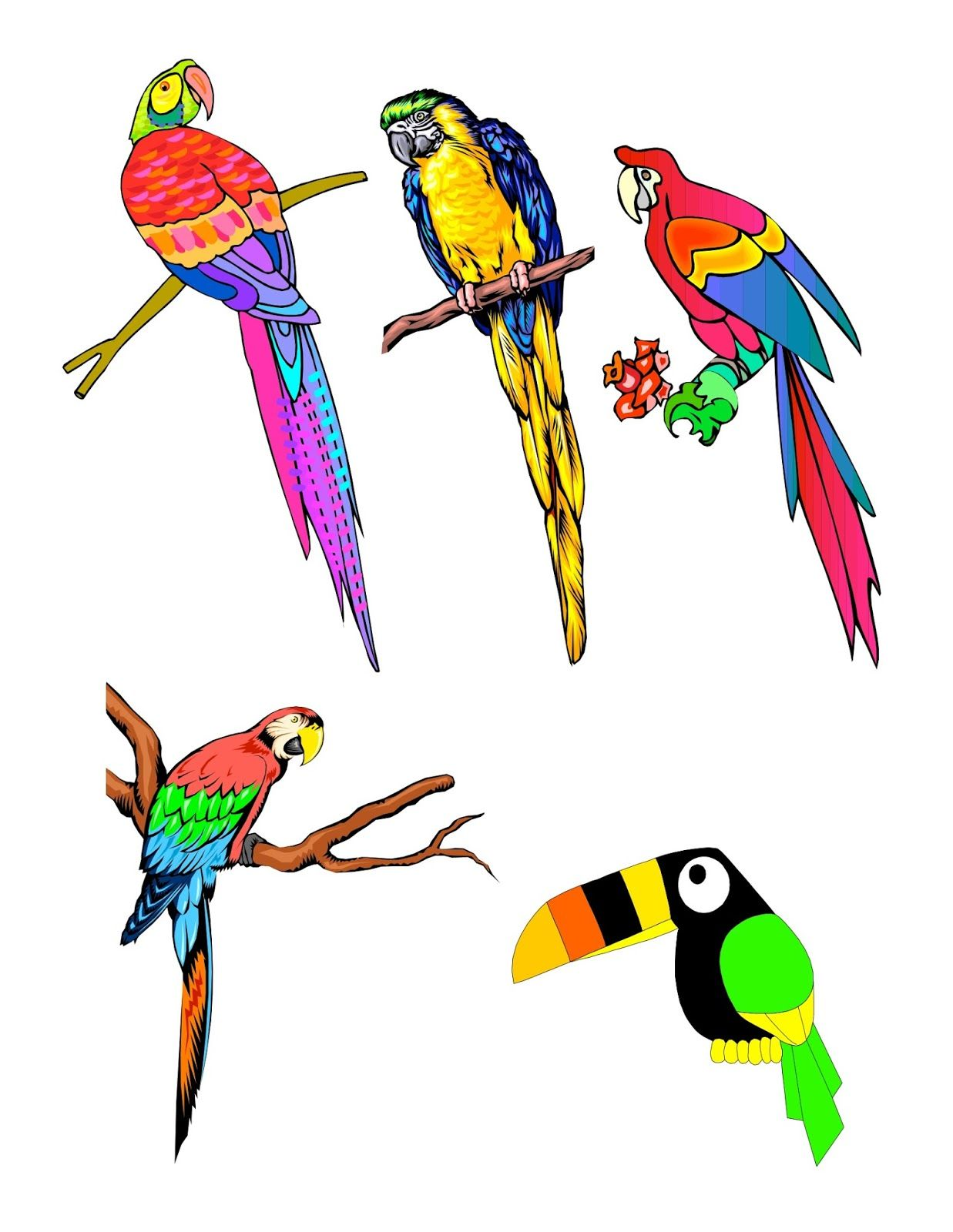Tropical bird clipart png library library Tropical Bird Drawing | Free download best Tropical Bird ... png library library