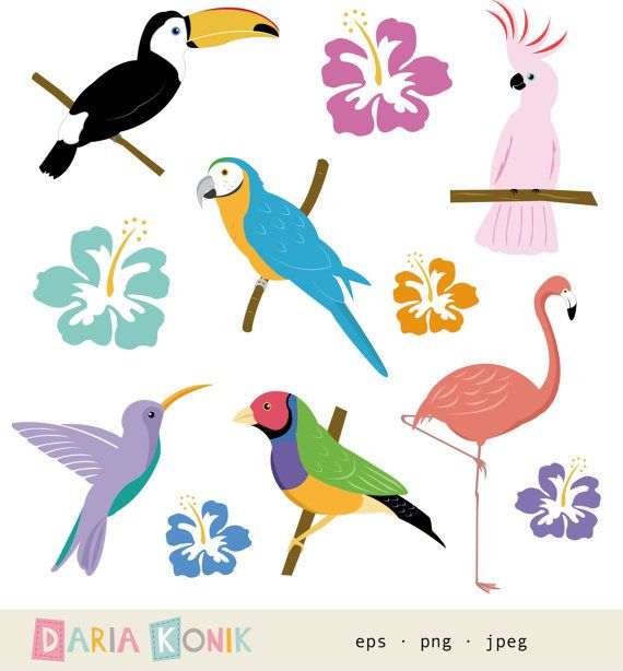 Tropical bird clipart black and white stock Tropical Birds Clipart Set for instant download by ... black and white stock
