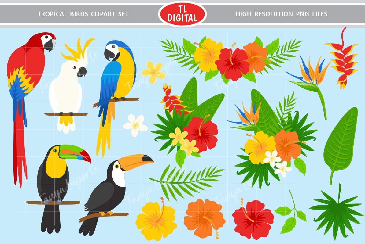 Tropical bird clipart image free stock Tropical Birds Clipart Set image free stock