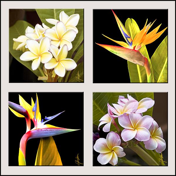 Tropical flower artwork image transparent Coasters – Tile Art – Tropical Flowers image transparent