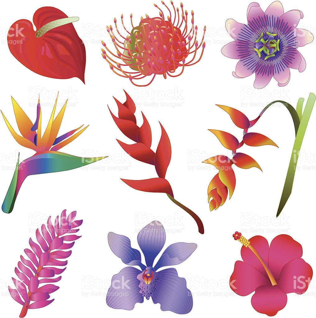 Tropical flowers pictures free png transparent stock Tropical Flowers stock vector art 165736412 | iStock png transparent stock