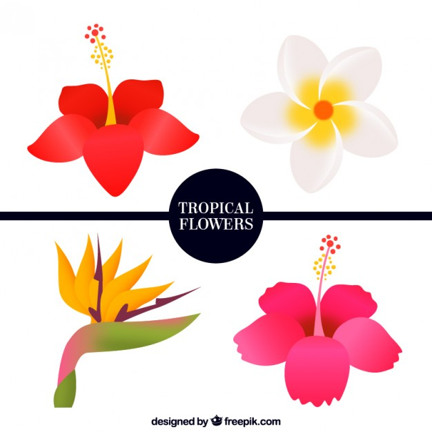 Tropical flowers pictures free clip black and white Pack of four tropical flowers Vector | Free Download clip black and white