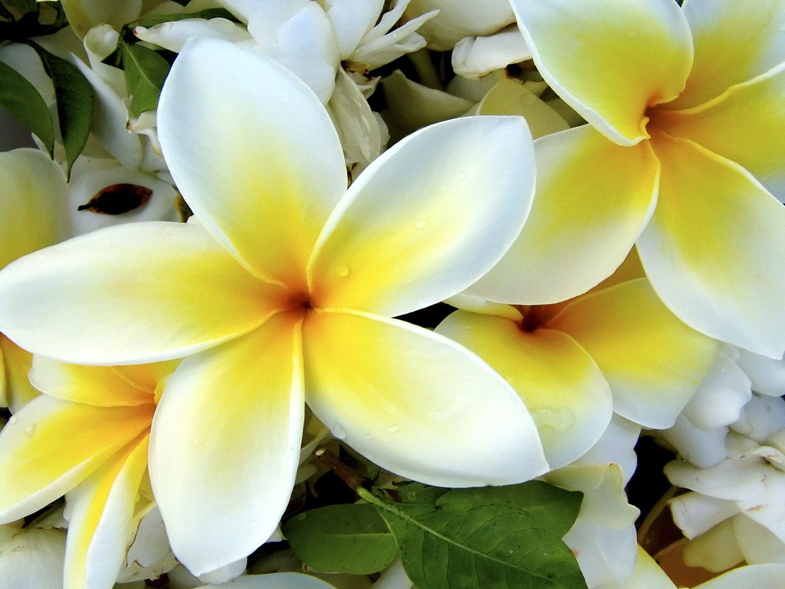 Tropical flowers pictures free picture black and white stock Exotic Flower Wallpapers - Wallpaper Cave picture black and white stock