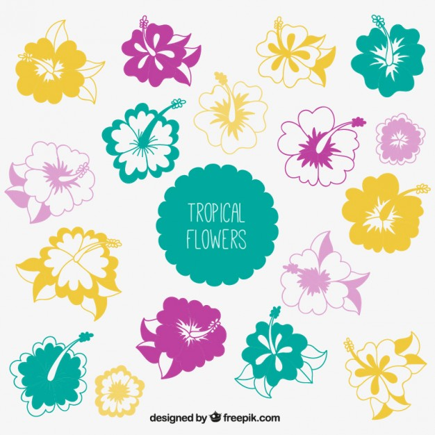Tropical flowers pictures free picture library Tropical flowers collection Vector | Free Download picture library