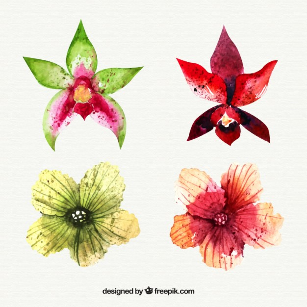 Tropical flowers pictures free graphic transparent library Set of watercolor tropical flowers Vector | Free Download graphic transparent library