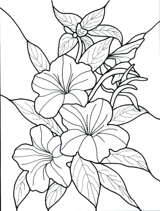 Tropical garden clipart for coloring picture royalty free garden coloring pages – developerridge.info picture royalty free