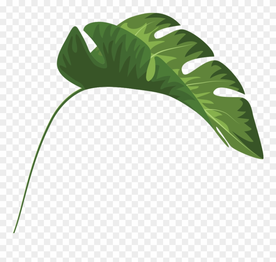 Tropical leaf clipart vector black and white library Tropical Leaves Palm Banana Monstera Mugs Clipart (#1944193 ... vector black and white library