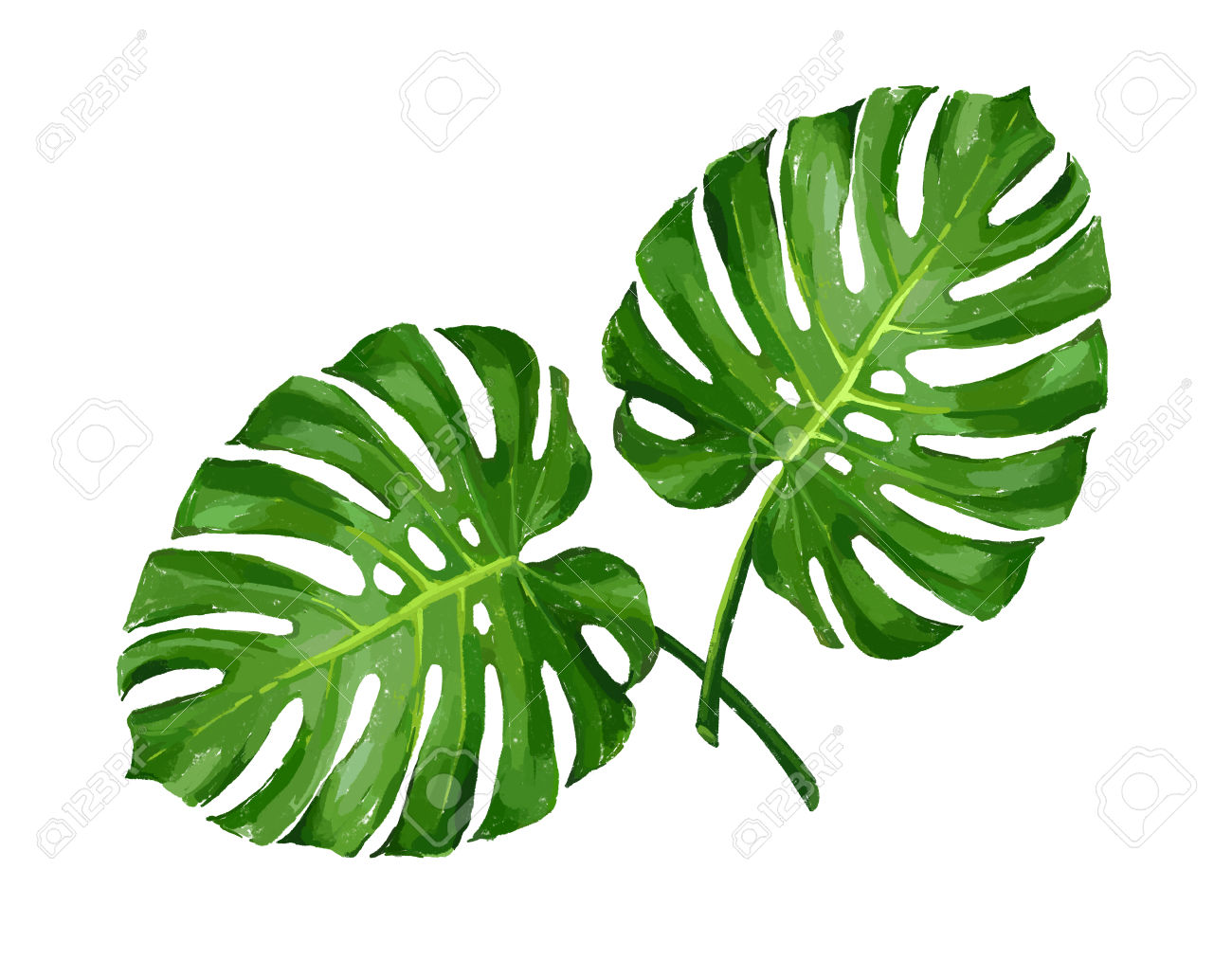 Tropical leaves clipart for coloring free download Tropical Leaves Clipart | Free download best Tropical Leaves ... free download