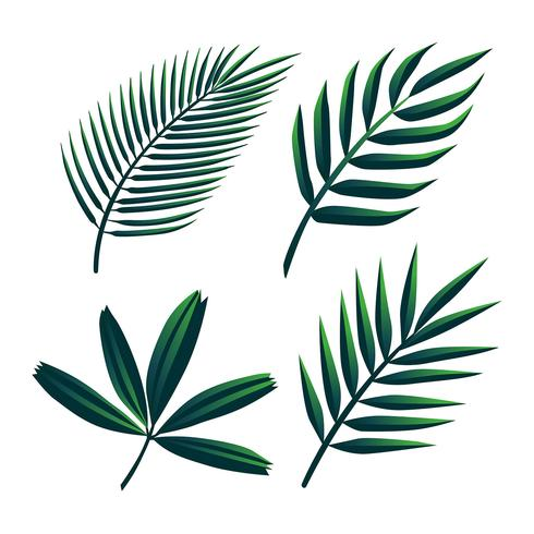Tropical palm leaves clipart png royalty free library Tropical Palm Green Leaves Clipart Set Vector - Download ... png royalty free library