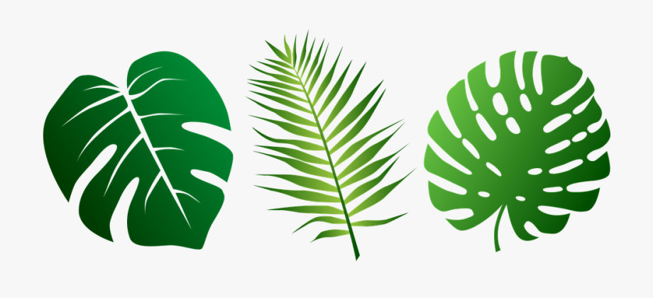 Tropical palm leaves clipart graphic royalty free Palm Leaves Clipart - Tropical Leaf Svg #78874 - Free ... graphic royalty free