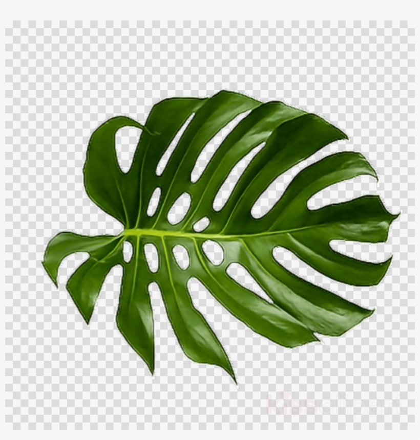 Tropical palm leaves clipart svg freeuse Tropical Leaf Png Clipart Palm Trees Leaf Clip Art ... svg freeuse