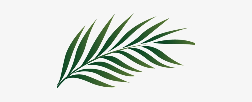 Tropical palm leaves clipart clip art black and white download Watercolor Tropical Leaves Png - Palm Tree Leaf Clipart ... clip art black and white download