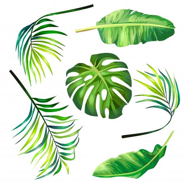 Tropical palm leaves clipart jpg transparent download Set of botanical vector illustrations of tropical palm ... jpg transparent download