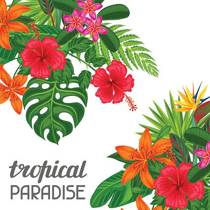 Tropical Paradise Card With Stylized Leaves and Image for ... svg royalty free