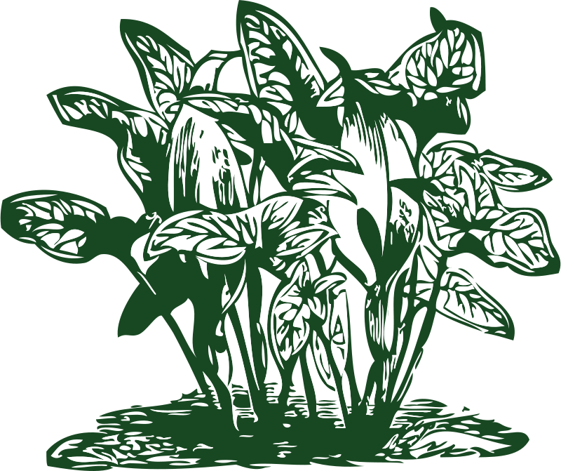 Tropical plant clipart graphic free library Free Clipart: Tropical plants | johnny_automatic graphic free library