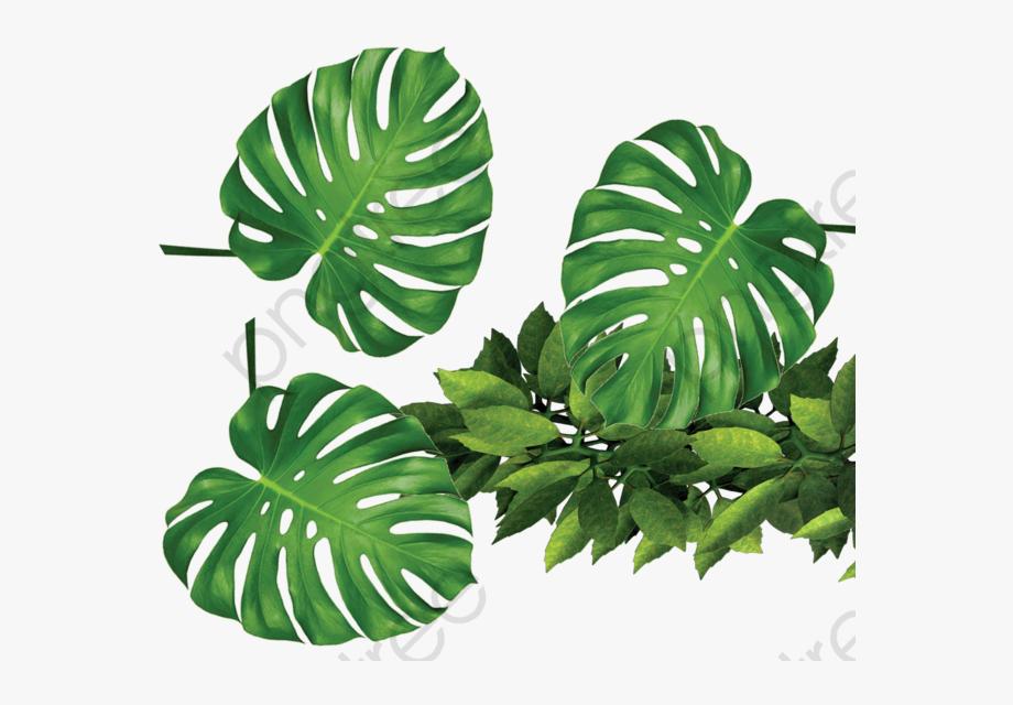Tropical plant clipart png transparent Tropical Plants Green Leaves - Tropical Plants Transparent ... png transparent