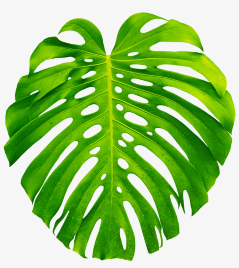 Tropical plant clipart image library Clipart Resolution 600*600 - Transparent Tropical Plant Png ... image library