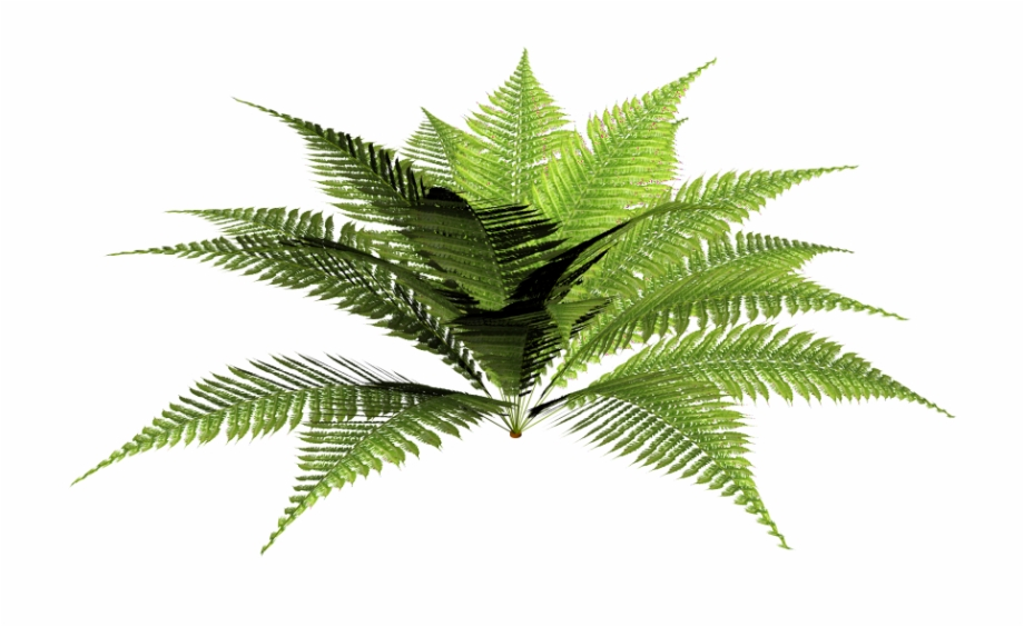 Tropical plant clipart picture freeuse stock Tropical Plant Png - Forest Plant Png Free PNG Images ... picture freeuse stock