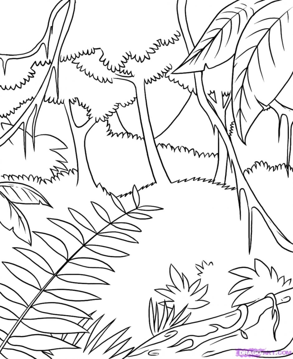 Tropical Rainforest Tree Drawing | Dom Wallpapers png library download